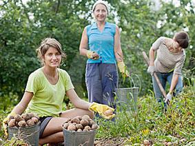Уборка урожая осень картинки